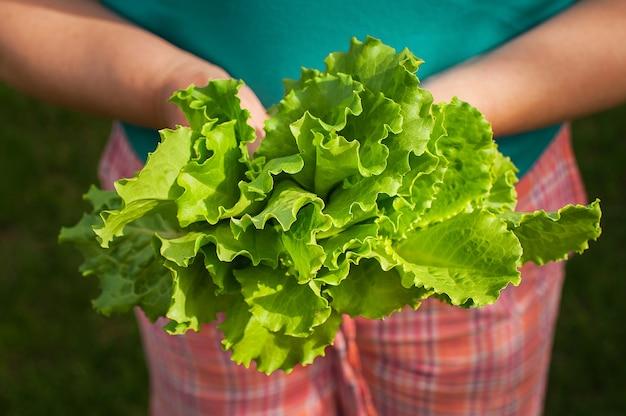 Женские руки, держа зеленый салат в огороде