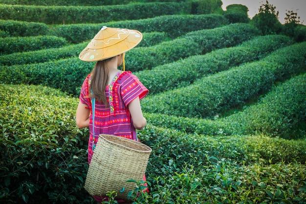 若い緑茶を持っている地元の山岳部族の女性は、夕方の丘の上に葉