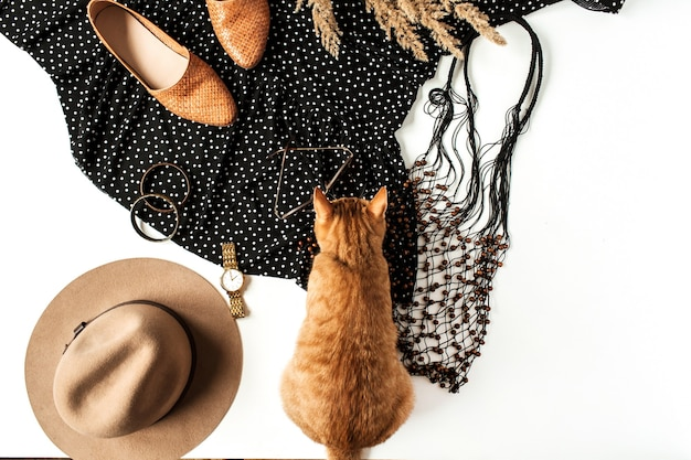 Women modern clothes, accessories, cute ginger kitten, reeds. shoes, dress with polka dot, watch, hat, bracelet, sunglasses.