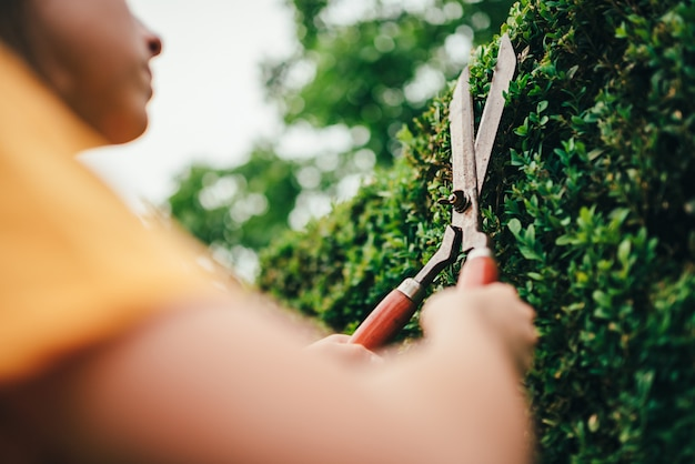 Women pruning hedge with hand shears