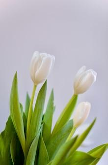 女性の日。白い唇。春の花。
