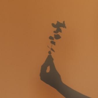 ユーカリの花の枝を持つ女性の手。壁の影。女性の手に植える