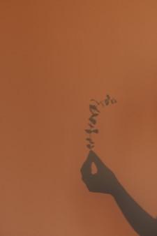 ユーカリの花の枝を持つ女性の手。壁の影。