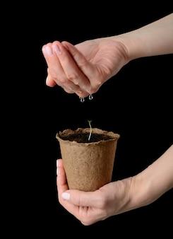 女性の手は苗が植えられた泥炭ポットを持ち、水をやられています