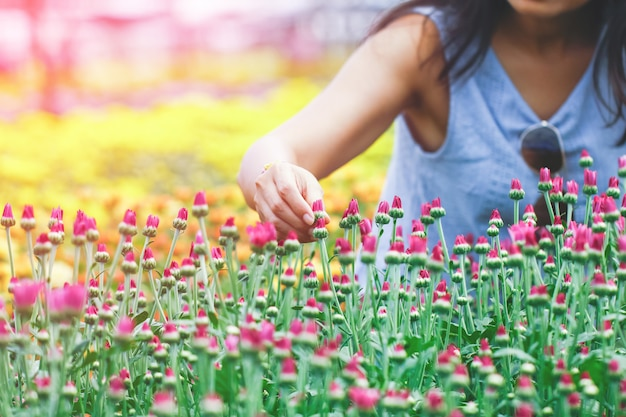 Women's hands are picking flowers