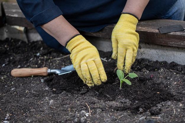 Женские руки в желтых перчатках сажают цветы в почву