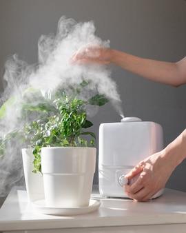 女性の手は、暖房シーズン中に加湿器と観葉植物からの蒸気を調整します