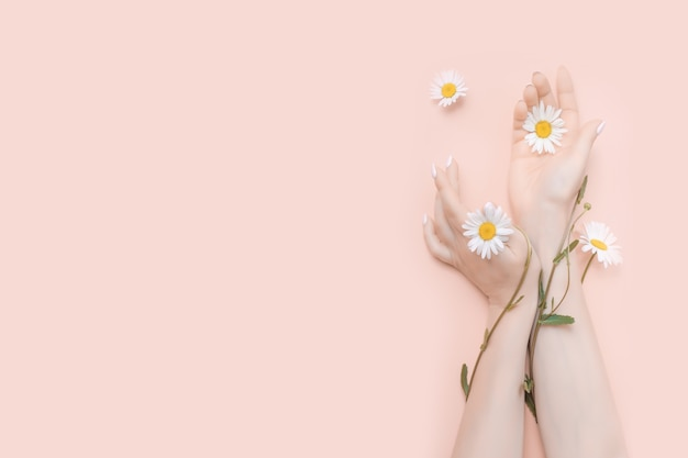 カモミールの花の自然化粧品のコンセプトを持つ女性の手。コピースペース