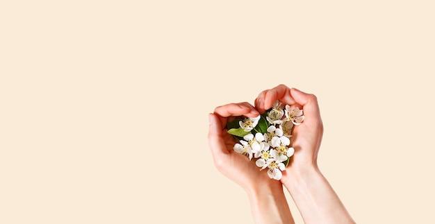 ハート型の手のひらとシャンパンピンクの背景に白いリンゴの花を持つ女性の手。春の時間、愛、優しさ。スキンケア、自然化粧品。バナー、テキスト用スペース