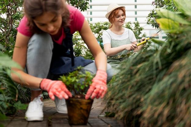 温室で植物の世話をしている女性