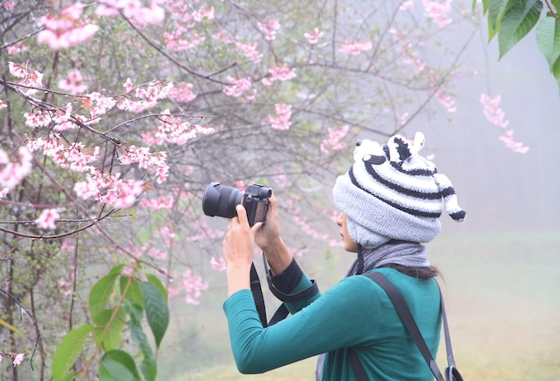 핑크 꽃 사진을 찍는 여성은 자연이 아름답게 피고 벚꽃이 만개합니다