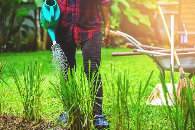 Women use watering allium tuberosum in the garden.