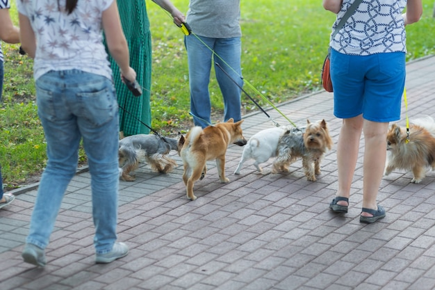 Группа женщин, гуляющих с собаками и щенками в городском парке