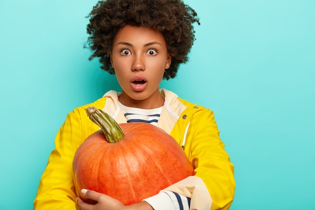 Wondered curly woman stares with eyes popped out, holds orange ripe pumpkin, wears yellow raincoat, isolated over blue background, copy space.