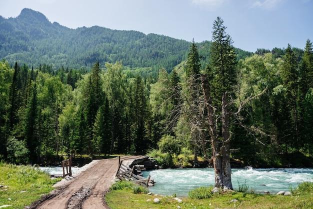 Прекрасный атмосферный альпийский пейзаж с сухим деревом и мостом через горную реку. гигантские горы с хвойным лесом в солнечный день. яркие пейзажи величественной высокогорной природы. хвойные деревья.