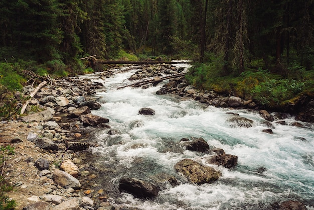 Замечательный быстрый поток воды от ледника в дикой горной речке с камнями. удивительный живописный пейзаж с ручьем, богатой растительностью, лесом и горами. атмосферные пейзажи высокогорья.