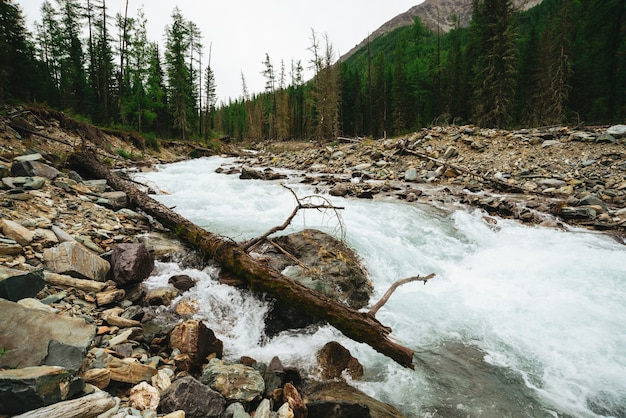 Wonderful fast water stream from glacier in wild mountain creek with stones. amazing scenic landscape with brook, rich vegetation, forest and mountain