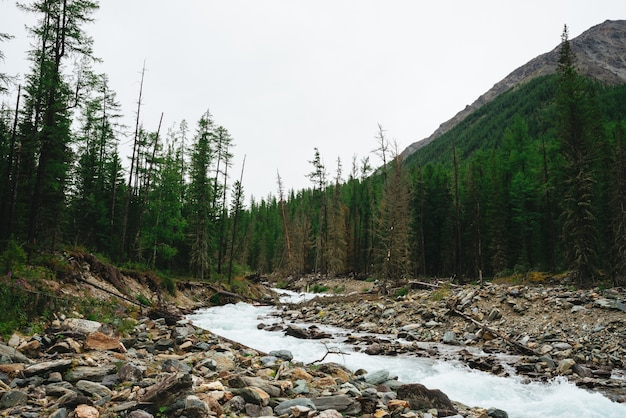 Wonderful fast water stream from glacier in wild mountain creek with stones.