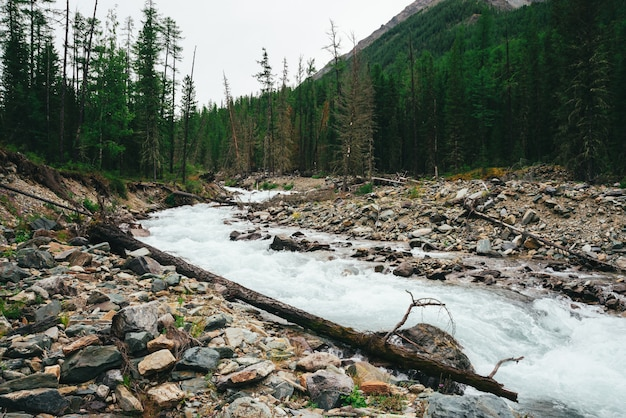Wonderful fast water stream from glacier in wild mountain creek with stones