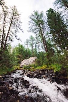 Wonderful fast water stream in wild mountain creek