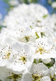 白の素晴らしい花木