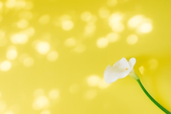 Wonderful fresh white bloom