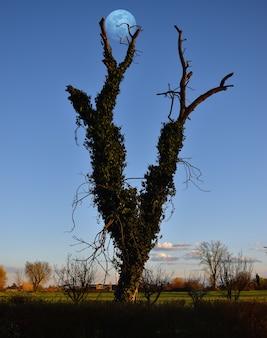 木の枝に設定された素晴らしい満月
