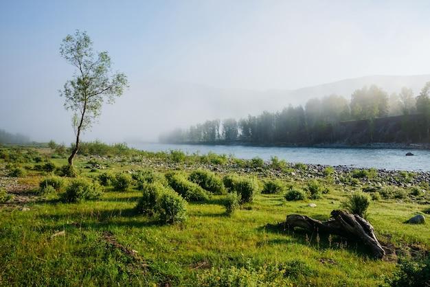 Прекрасный зеленый утренний пейзаж с одним деревом возле горной реки в тумане. красивая коряга на лугу с зеленью у реки в тумане. спокойный пейзаж приятной утренней свежести. вдохновляющий вид.