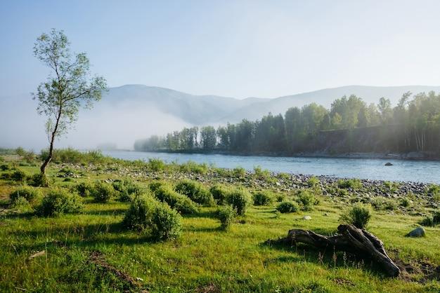 Прекрасный зеленый утренний пейзаж с одним деревом возле горной реки в тумане красивая коряга на лугу