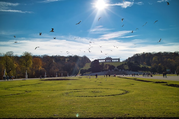 Wonderful landscape before schonbrunn palace in vienna, austria with wide green field and flying birds above in a blue sky.