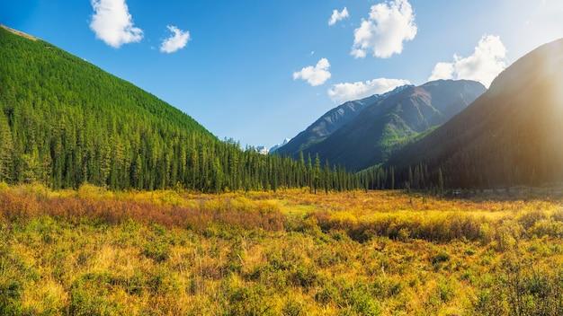 晴れた秋の日に木々が生い茂る美しい緑の山々への素晴らしい風景。日光の下で森の丘と鮮やかな葉の風景。黄金の緑と森のある絵のように美しい山々。