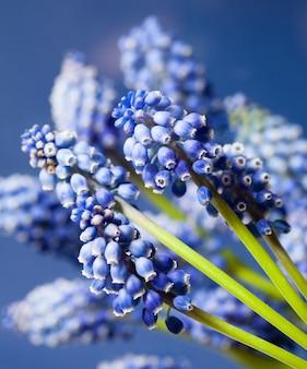 素敵なムスカリボケの花