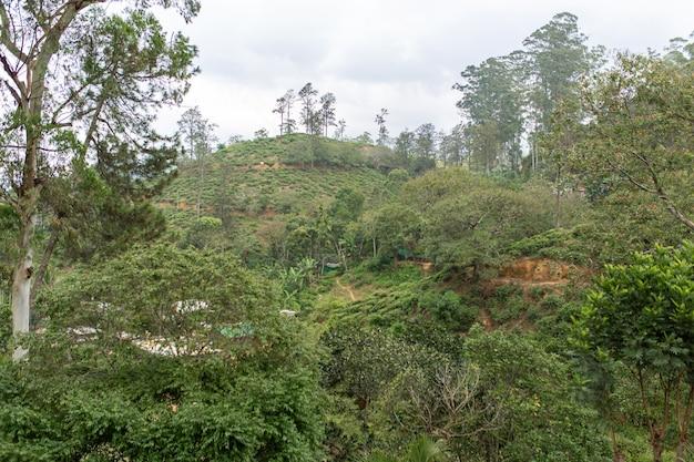 Замечательный природный ландшафт. зеленая холмистая долина а