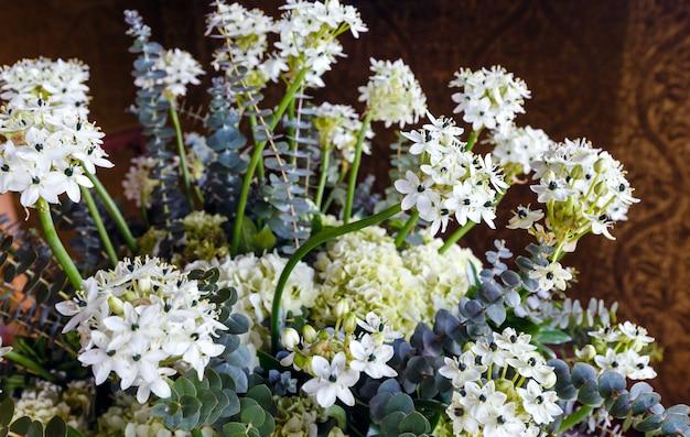 室内に小さな白い花が咲く素晴らしい植物