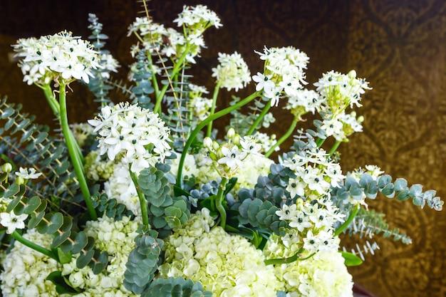 屋内に小さな白い花が咲く素晴らしい植物