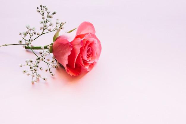 Wonderful rose and blooming twig