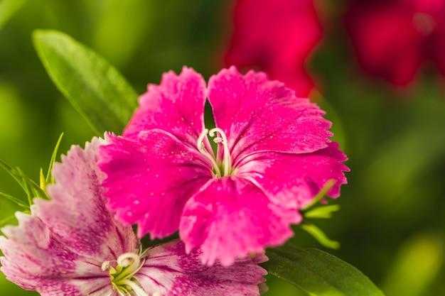 녹색 잎 사이 멋진 장미 신선한 꽃