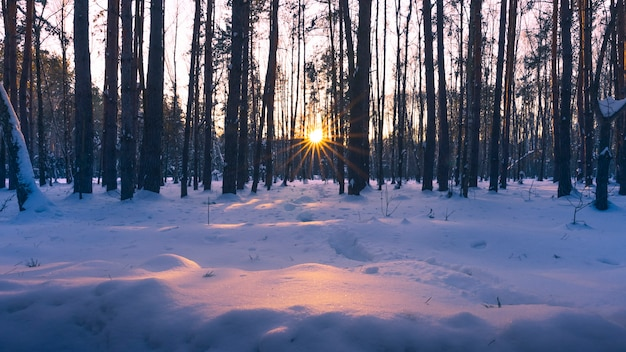 Wonderful sunset in the winter forest