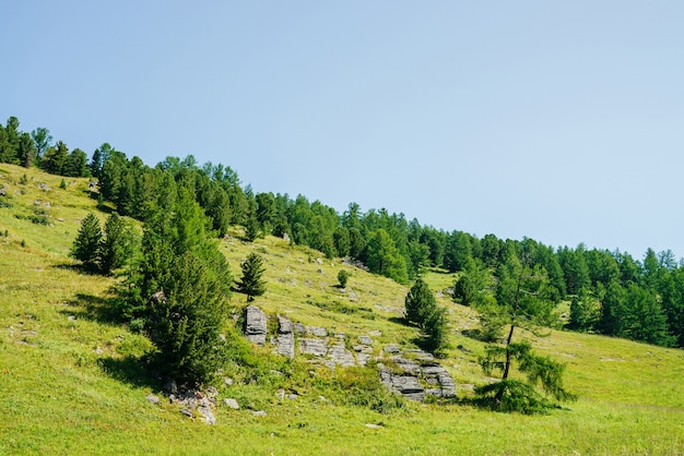 Wonderful view to beautiful green hill slope with coniferous trees and rocks under clear blue sky.