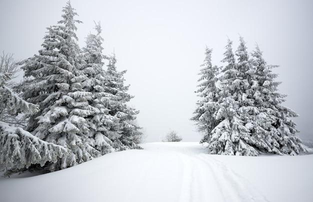 회색 흐린 하늘 배경에 전나무 나무와 눈 눈 덮인 언덕의 멋진 전망.
