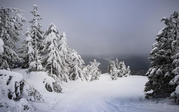 Прекрасный вид на заснеженный холм с елями и снегом на фоне серого облачного неба.