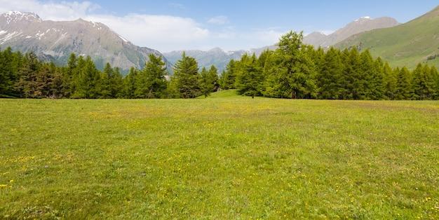 Прекрасный вид на итальянские альпы на фоне леса в летний день. пьемонт - северная италия.