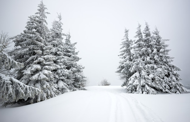 Wonderful view of a snowy hill with fir trees and snow on a background of gray cloudy sky.