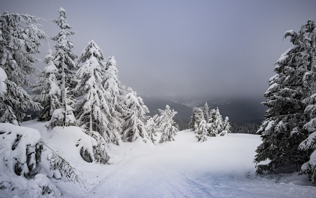 Wonderful view of a snowy hill with fir trees and snow on a background of gray cloudy sky