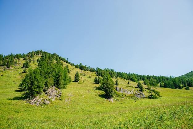 澄んだ青い空の下に針葉樹の木がある美しい緑の丘の頂上への素晴らしい景色。