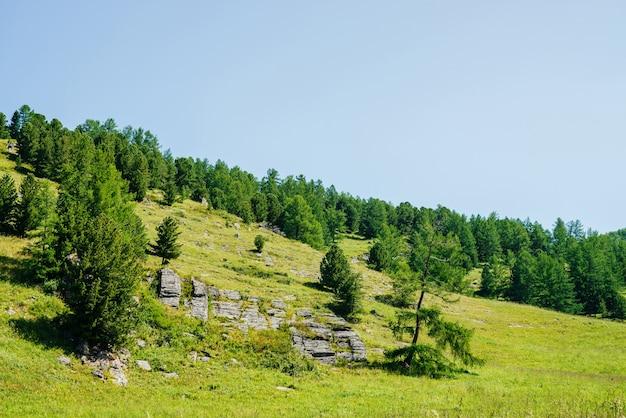 澄んだ青い空の下で針葉樹と岩のある美しい緑の山腹の素晴らしい景色。