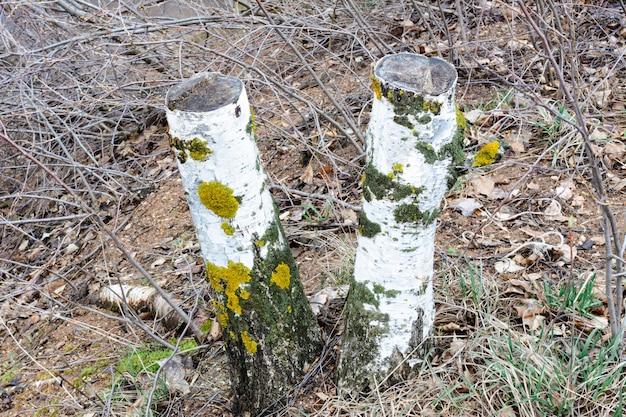 伐採後に廃棄された木材。違法な森林伐採。人の環境への影響。環境問題。地球温暖化。気候の変化。
