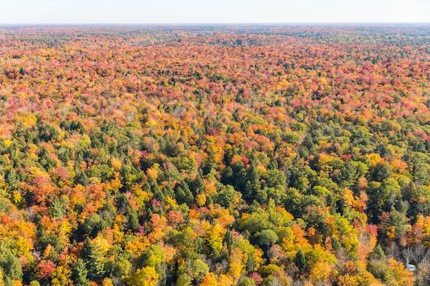 木と木、秋、空撮、カナダ