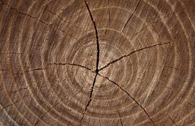 Деревянный фон старый деревянный дуб срез поверхности грубая органическая текстура годичных колец крупным планом