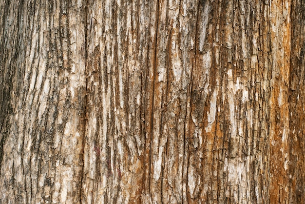 Wood background texture from tree